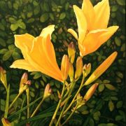 <b>Lilies </b><br/>2006<br/>Oil on Canvas<br/>28 x 22 inches