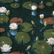 <b>Waterlilies 2</b><br2002><br>oil on canvas<br>24 x 30 inches